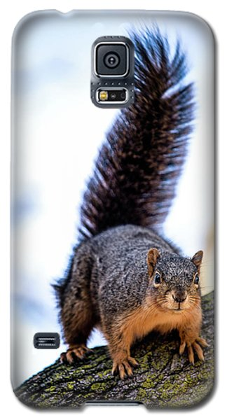 Fox Squirrel On Alert Galaxy S5 Case by Onyonet  Photo Studios