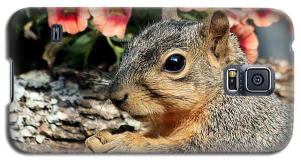 Fox Squirrel Portrait Galaxy S5 Case