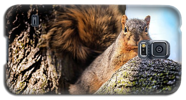 Fox Squirrel Watching Me Galaxy S5 Case by Onyonet  Photo Studios