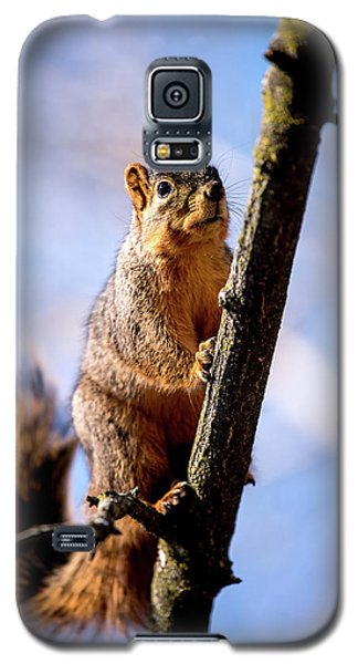 Fox Squirrel's Last Look Galaxy S5 Case by Onyonet  Photo Studios