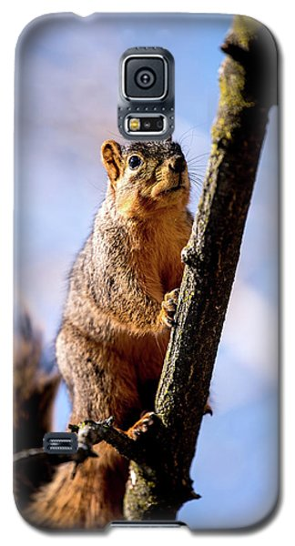 Fox Squirrel's Last Look Galaxy S5 Case
