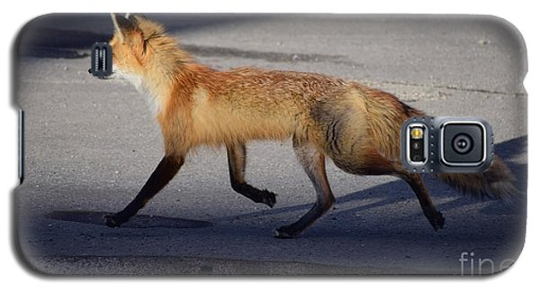 Galaxy S5 Case featuring the photograph Fox Trot by Johanne Peale
