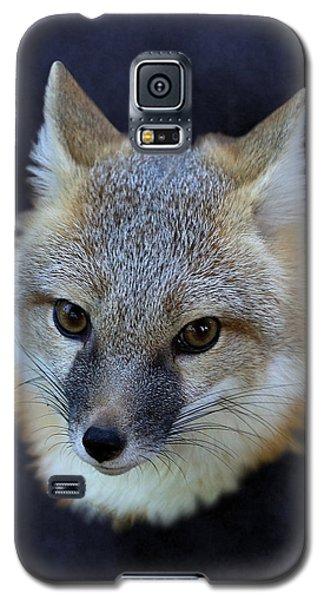 Foxburst Galaxy S5 Case