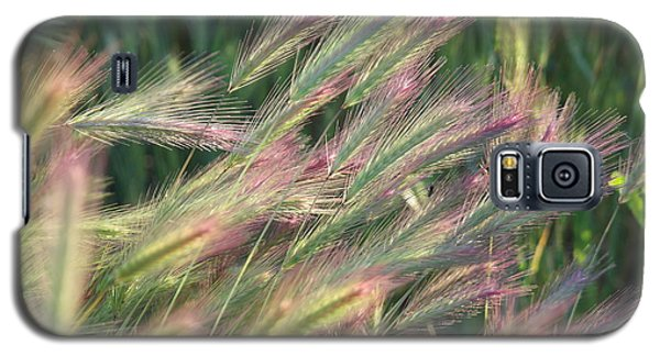 Foxtails In Spring Galaxy S5 Case