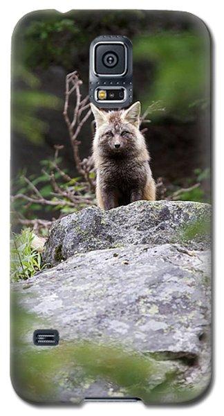 Foxy Galaxy S5 Case