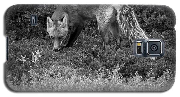 Foxy Gaze Galaxy S5 Case