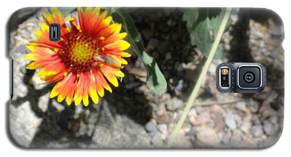 Fragile Floral Life On The Trail Galaxy S5 Case