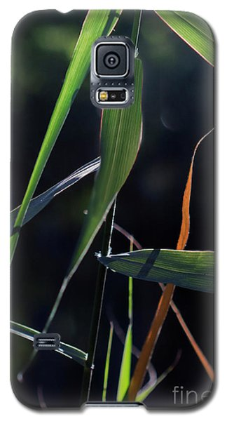 Galaxy S5 Case featuring the photograph Fragment by Linda Lees