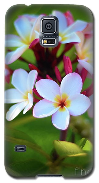 Galaxy S5 Case featuring the photograph Fragrant Sunset by Kelly Wade