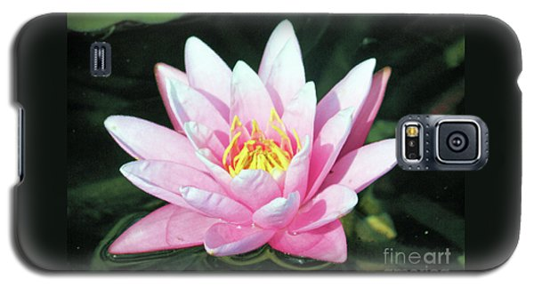 Frail Beauty - A Water Lily Galaxy S5 Case by J Jaiam