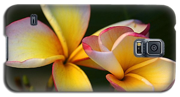 Frangipani Flowers Galaxy S5 Case by Ralph A  Ledergerber-Photography