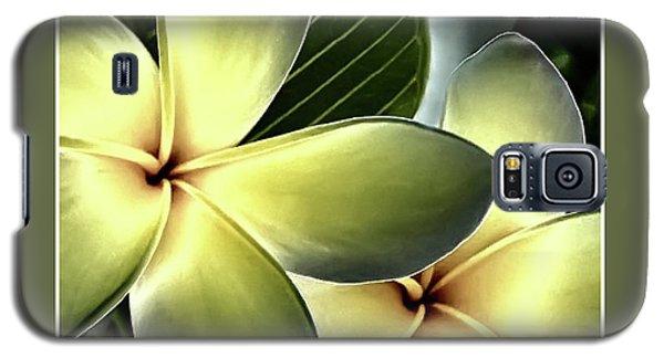 Frangipani - Plumeria Galaxy S5 Case