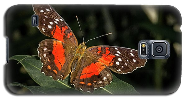 Free As A Butterfly Galaxy S5 Case