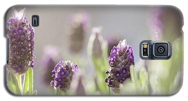 French Lavendar Buds Galaxy S5 Case