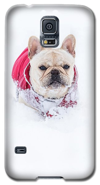 Frenchie In The Snow Galaxy S5 Case