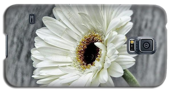Fresh As A Daisy Galaxy S5 Case by Karen Stahlros
