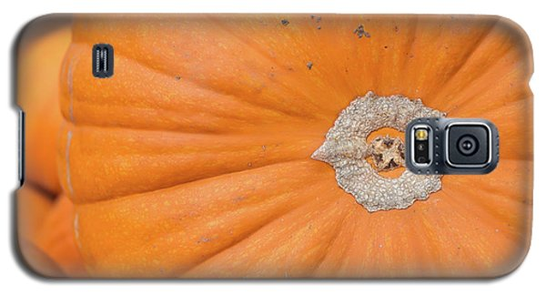 Fresh Organic Orange Giant Pumking Harvesting From Farm At Farme Galaxy S5 Case