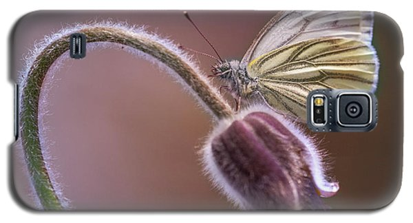Fresh Pasque Flower And White Butterfly Galaxy S5 Case by Jaroslaw Blaminsky