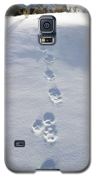 Fresh Wolf Tracks In Yellowstone Galaxy S5 Case