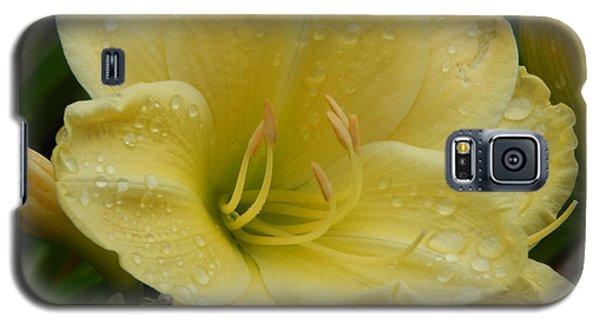 Fresh Yellow Galaxy S5 Case
