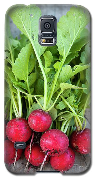 Galaxy S5 Case featuring the photograph Freshly Picked Radishes by Elena Elisseeva