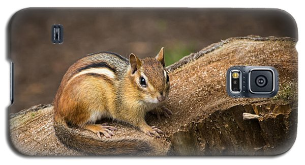 Galaxy S5 Case featuring the photograph Friendly Chipmunk by Paul Miller