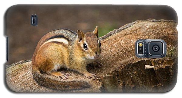 Friendly Chipmunk Galaxy S5 Case by Paul Miller