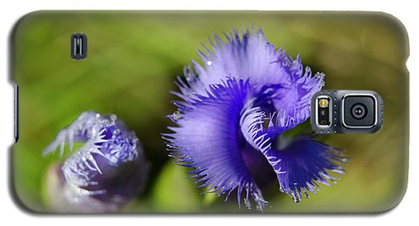 Galaxy S5 Case featuring the photograph Fringed Gentian by Ann Bridges