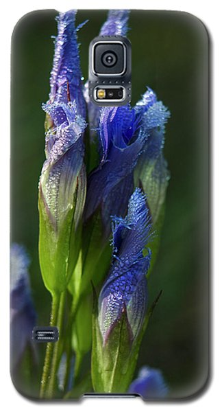 Galaxy S5 Case featuring the photograph Fringed Getian With Dew by Ann Bridges