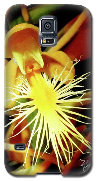 Galaxy S5 Case featuring the photograph Fringed Yellow Orchid by Meta Gatschenberger