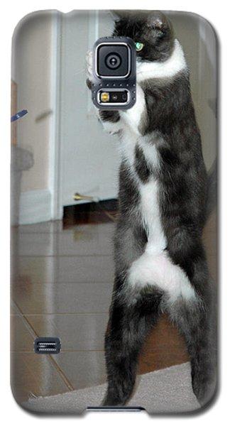 Frisbee Cat Galaxy S5 Case by LeeAnn McLaneGoetz McLaneGoetzStudioLLCcom