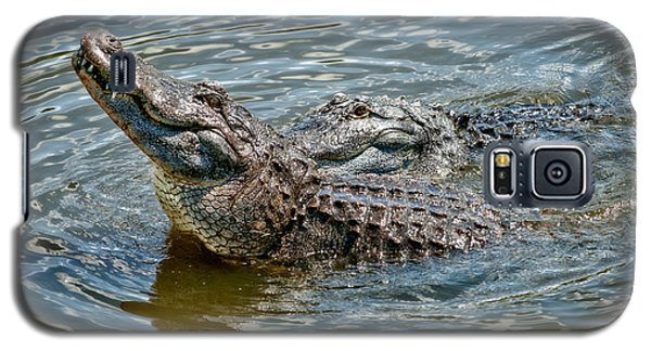 Galaxy S5 Case featuring the photograph Frisky In Florida by Christopher Holmes