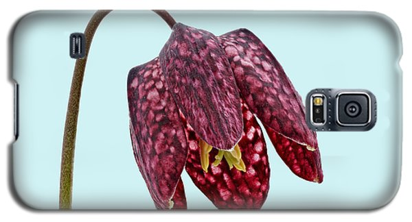 Galaxy S5 Case featuring the photograph Fritillaria Meleagris Blue Background by Paul Gulliver
