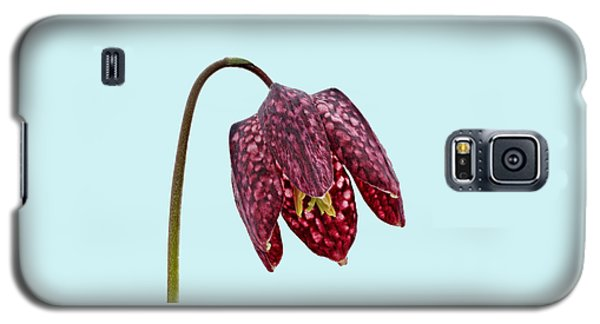 Fritillaria Meleagris Blue Background Galaxy S5 Case by Paul Gulliver