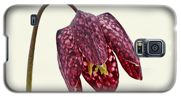 Galaxy S5 Case featuring the photograph Fritillaria Meleagris Cream Background by Paul Gulliver
