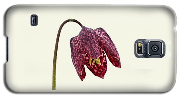 Fritillaria Meleagris Cream Background Galaxy S5 Case by Paul Gulliver