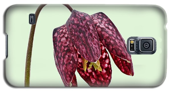 Galaxy S5 Case featuring the photograph Fritillaria Meleagris Green Background by Paul Gulliver