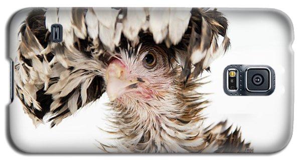 Frizzle Tolbount Polish Hen Galaxy S5 Case
