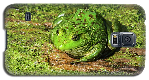 Frog And Duck Weed Galaxy S5 Case