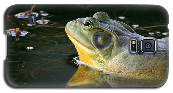 Galaxy S5 Case featuring the photograph Frog At Sunset by Paula Guttilla