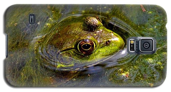 Frog In A Stream 003 Galaxy S5 Case