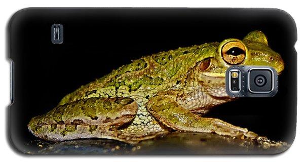 Galaxy S5 Case featuring the photograph Cuban Tree Frog by Olga Hamilton