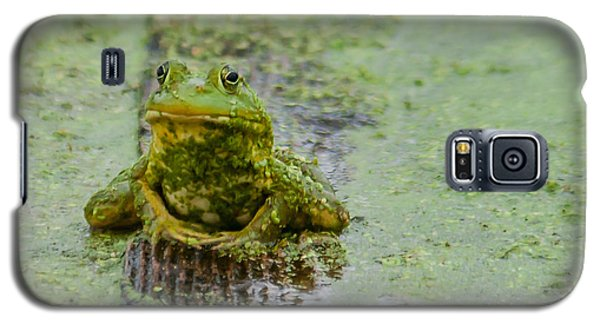 Galaxy S5 Case featuring the photograph Frog On A Plank by Edward Peterson