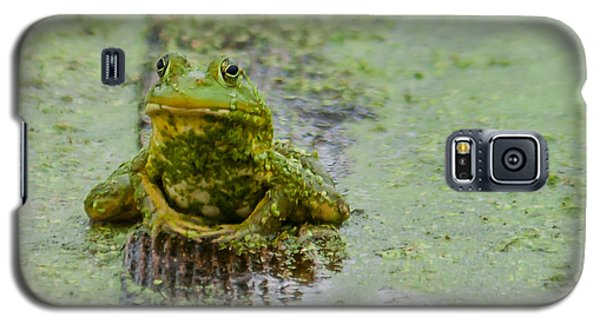 Frog On A Plank Galaxy S5 Case