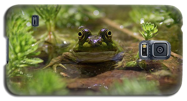 Galaxy S5 Case featuring the photograph Froggy by Douglas Stucky