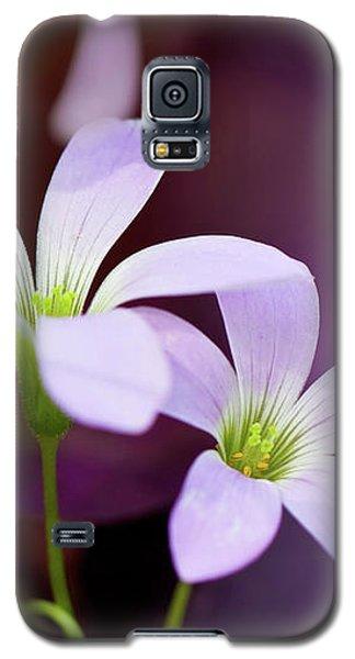 From Garden Of Dream Galaxy S5 Case