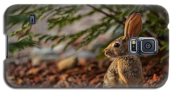 Galaxy S5 Case featuring the photograph Frontyard Bunny by Dan McManus