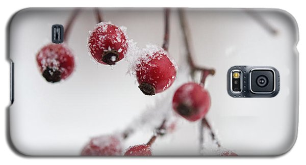 Frosted Berries Galaxy S5 Case