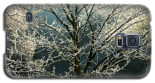 Frosted Trees Galaxy S5 Case