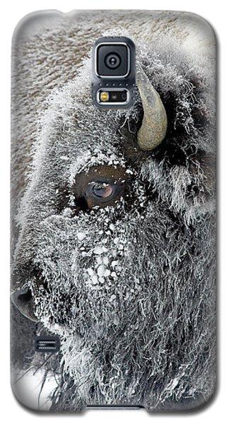 Frosty Bison Galaxy S5 Case